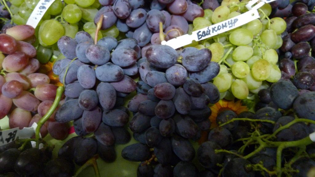 harakteristika-vinograda-bajkonur
